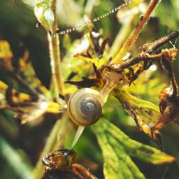 petsandanimals nature snail mygarden mygardenpics