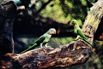 nature naturephotography photography birds parrot freetoedit