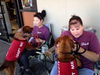 dogs volunteer adopt cute