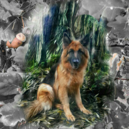 autumn photography mydog myedit germanshepherd