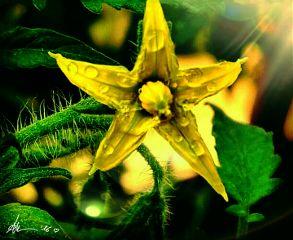photo flowers nature wonderful yellowflower