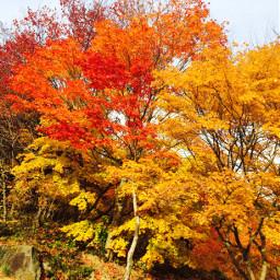 freetoedit nature autumnal