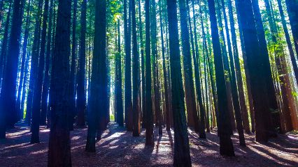 forest trees sony woods magical
