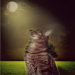 freetoedit cat moon moonlight full