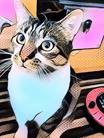 My cat Pablo 💜