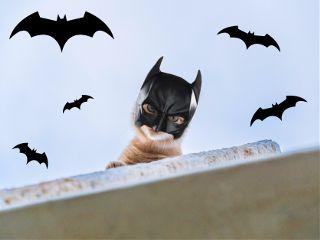 freetoedit remix remixed batman catman