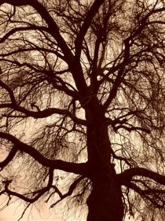dpctrees