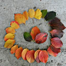 freetoedit leaf leaflove leafs eyhsi