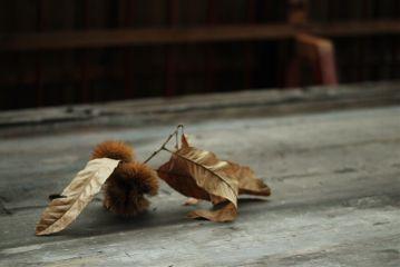 freetoedit autumn
